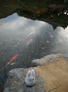 Totoro et les poissons